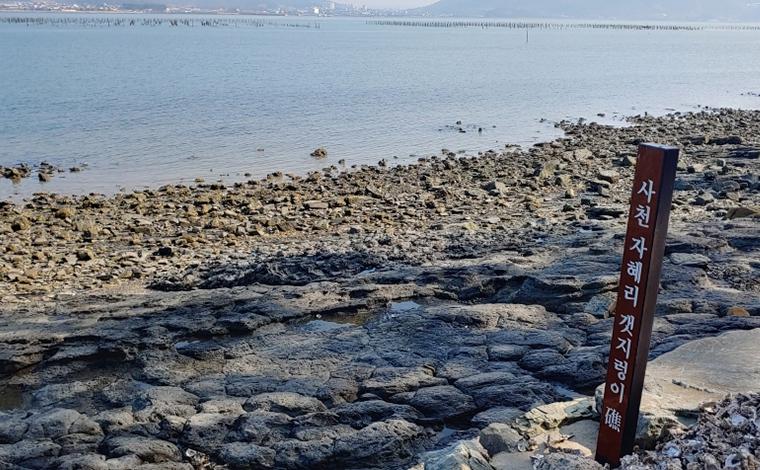 사천 자혜리 화석 갯지렁이초