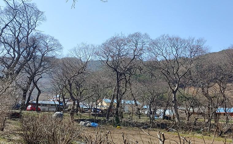 사천 연천숲